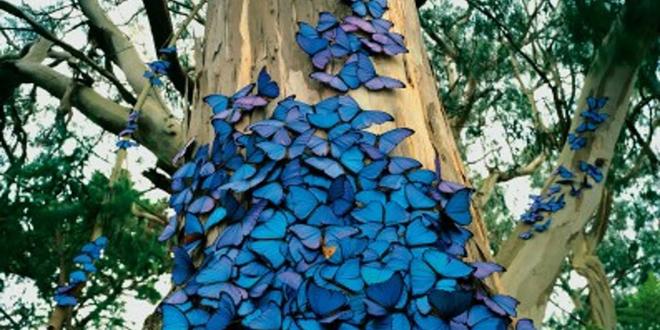 Mavi kelebekler, Srebrenitsa ve 11 temmuz 1995